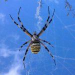 la toile et l'araignée ... - Photo H. Moiselet
