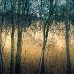 Lumière des bois- photo H. Moiselet