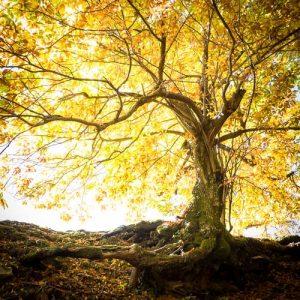 arbre soleil couchant