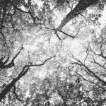lumière à travers les arbres