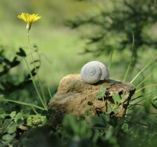 Se poser comme l'escargot Photo H. Moiselet
