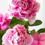 fleurs épanouies