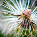 insecte sur fleur photo H.Moisselet