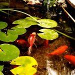 Les hôtes du bassin